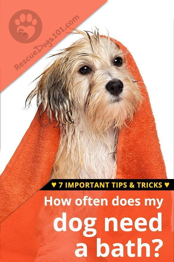 7 Important Dog Bathing Tips Dogs Dog Grooming Tips Dog Care