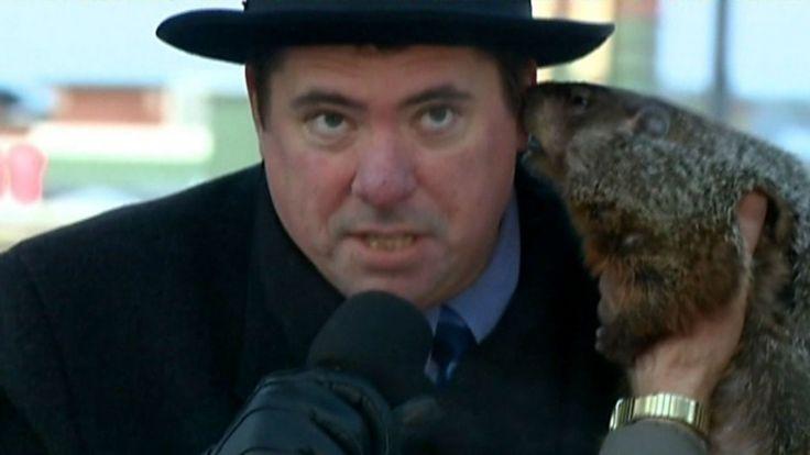El 2 de febrero en un programa de televisión transmitieron en directo el Día de la Marmota de Sun Prairie en Wisconsin con la sorpresa de que la marmota mordió al alcalde.