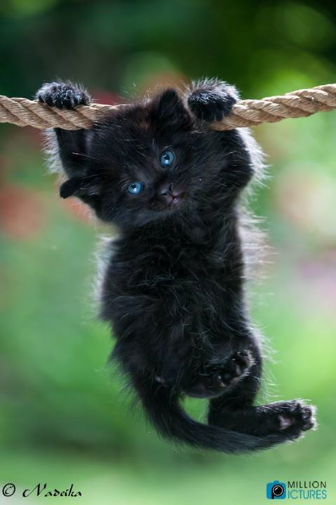 black kitty with blue eyes - so cute ♥♥♥♥ #cat                                                                                                                                                                                 More