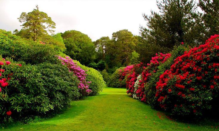 Газонная дорожка. #газон #lawn #дорожка #сад #дача #дизайн