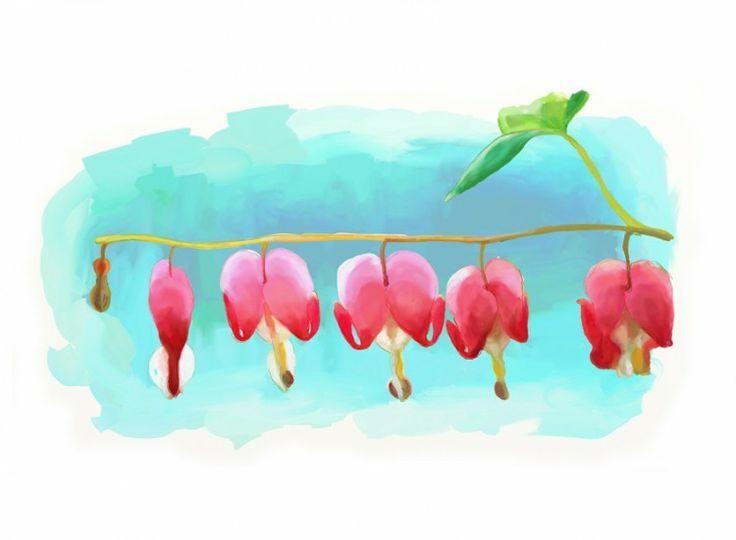 Bleeding Heart. Corazón Sangrante. Ilustración en acuarela de la flor del Bleeding heart. Según el Bach es una flor que ayuda a despegar los apegos emocionales.