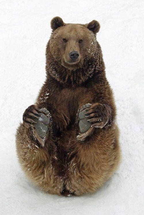 | Amazing ✈ World - Brown Bear
