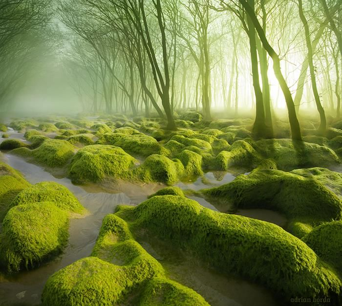 The Morning Mist in The Moss Swamp
