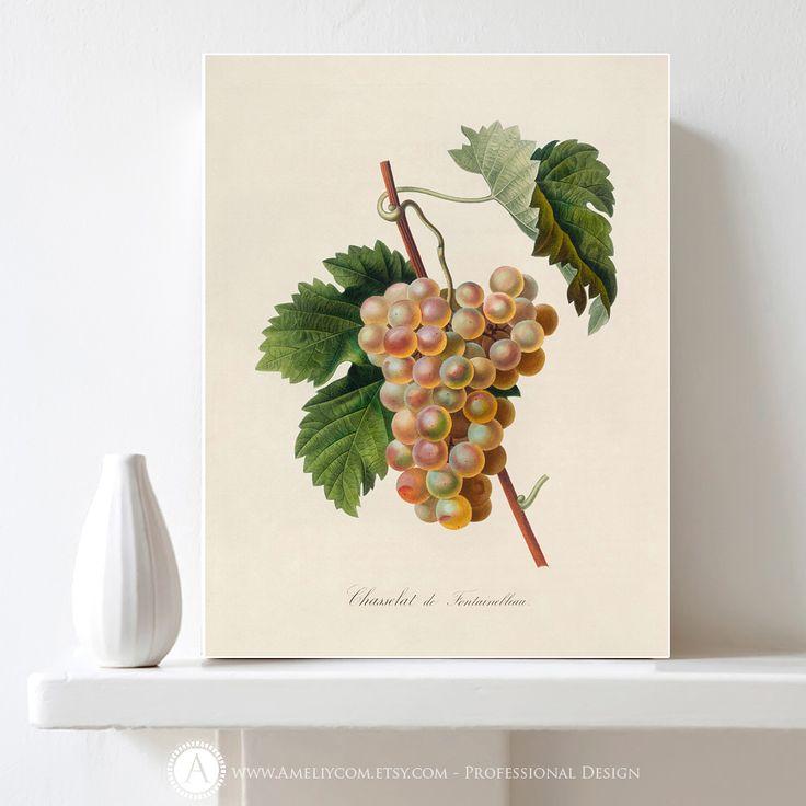 https://www.etsy.com/listing/476538854/printable-grapes-poster-botanical?ref=listings_manager_grid #Printable #Botanical #Illustration #Grapes