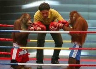 End Orangutan Boxing Matches in Thailand http://forcechange.com/62904/end-orangutan-boxing-matches-in-thailand-now/?utm_source=ForceChange+Newsletter_campaign=8ae41217ba-NL3874_2_2013_medium=email