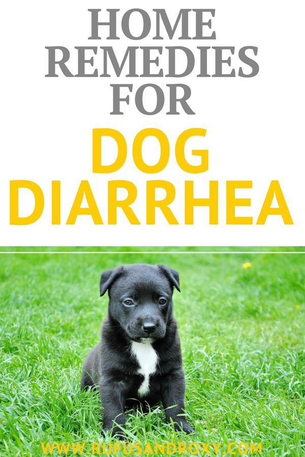 5 Best Dog Diarrhea Home Remedies Dog Diarrhea Remedy Dog Upset