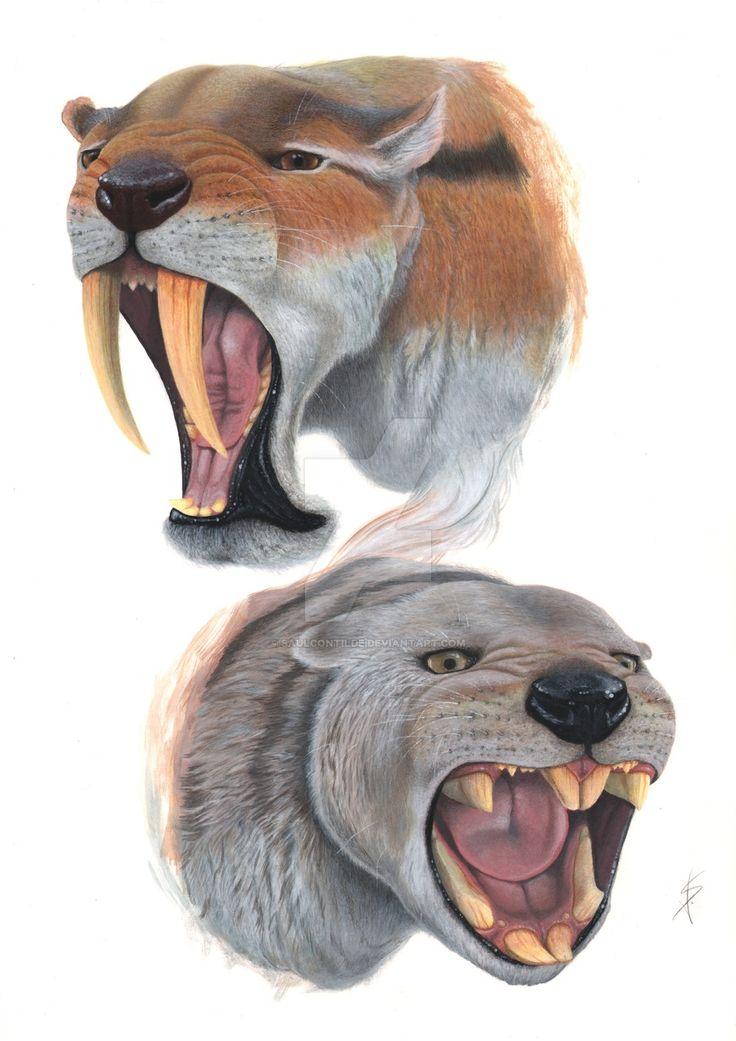 thylacosmilus_atrox_and_thylacoleo_carnifex_by_saulcontilde-d4lmiob.jpg (900×1273)