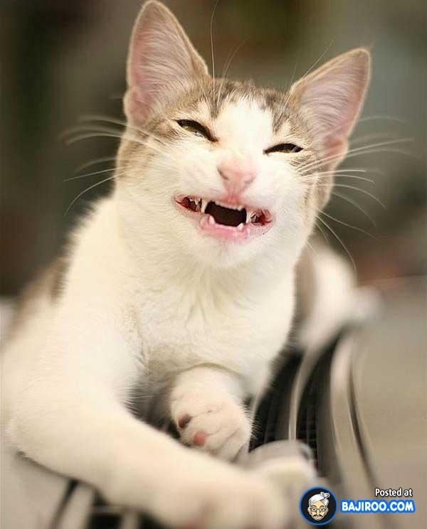 24 melhores imagens sobre smile cat no Pinterest   Gatos ...