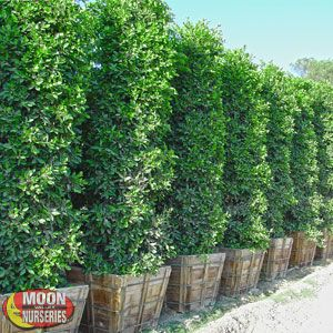 When Landscaping Your Home Or Office Visit Moon Valley Nurseries A Local Nursery With More Than 20 Southwestern Locations For All Needs