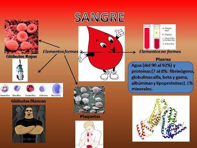 Sangre y sus componentes