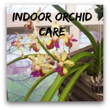 orchid plant care instructions
