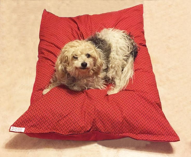 Peter test driving his new cushion from Dog & Cat Pad - Lovely!