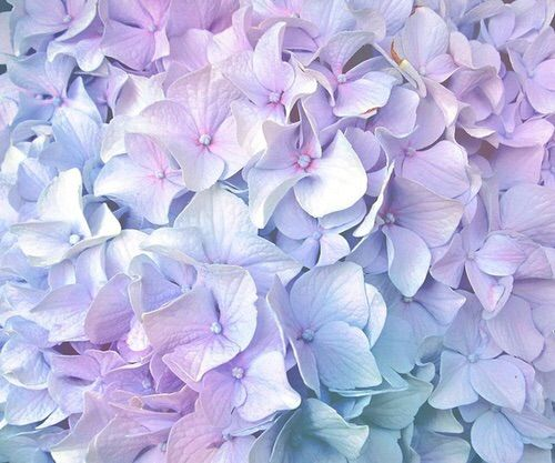 we heart it ������� background blossoms flowers