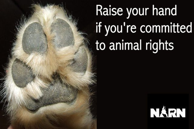 17 Best Animal Rights Quotes On Pinterest