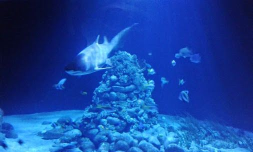 Shark me... #rekin, #Rhincodon