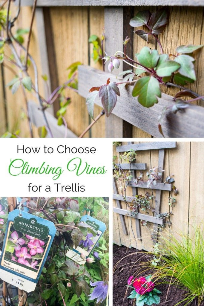 How to Choose the Best Climbing Vines for a Trellis | Flowering Vines | Climbing plants | Gardening | Mixing vines