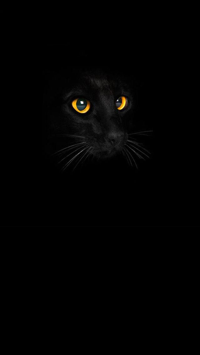 Black Cat Cool cats animal iPhone wallpaper mobile9