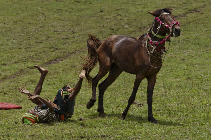 A Pasola rider falls after hit by spear during the pasola war festival at Wainyapu village on March 7 in Sumba Island, East Nusa Tenggara, Indonesia. Sandalwood pony horses are native to the island of Sumba in Indonesia. For the people of Sumba, the Sandalwood horse has an important role in all aspects of their daily life, including transportation and culture. Pasola involves two teams of men on horseback charging towards each other.