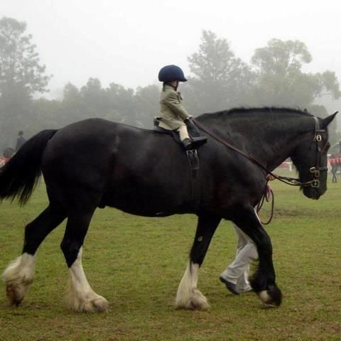 """Reminds me of the pony club manual illustration """"horse is too big for child"""""""