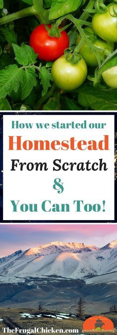 Always wanted to homestead but think it's out of reach? Here's how we got started homesteading and how you can get started!