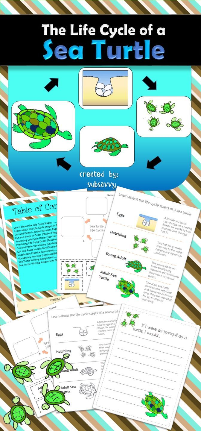 PRODUCT DESCRIPTION  K-4th Life Cycle Activities of a Sea Turtle!    Includes:  Table of Contents- describes fourteen pages of Life Cycle activities  Learn about the Life Cycle Stages- Describes each phase of the life cycle of a sea turtle.   Learn about the Life Cycle Stages (Black and White version)  Cut & Paste in Order- Students cut out and paste pictures of each stage in the correct order.   Cut & Paste in Order (Black and White)