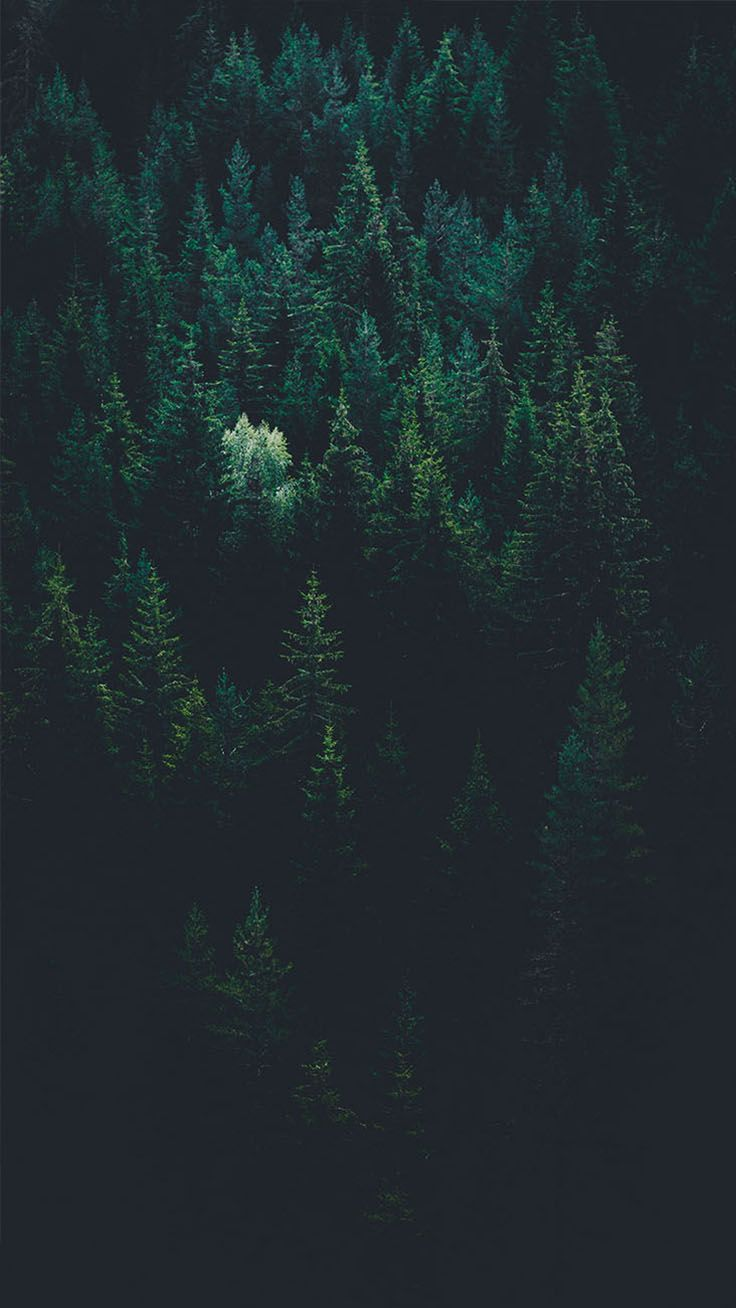 Night Forest Wallpaper Iphone