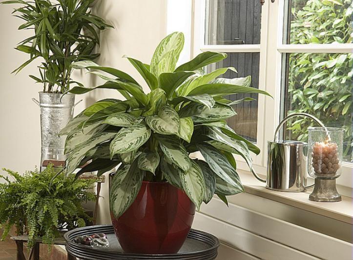 161 melhores imagens de plantes d 39 int rieur mode d for Emploi decoratrice d interieur