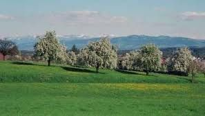 Thurgau, Switzerland landscape | The Thurgau - the land of a thousand and one apple trees...