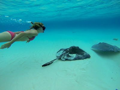 What to do in Grand Cayman Islands - swim with stingrays and Stingray City! So awesome