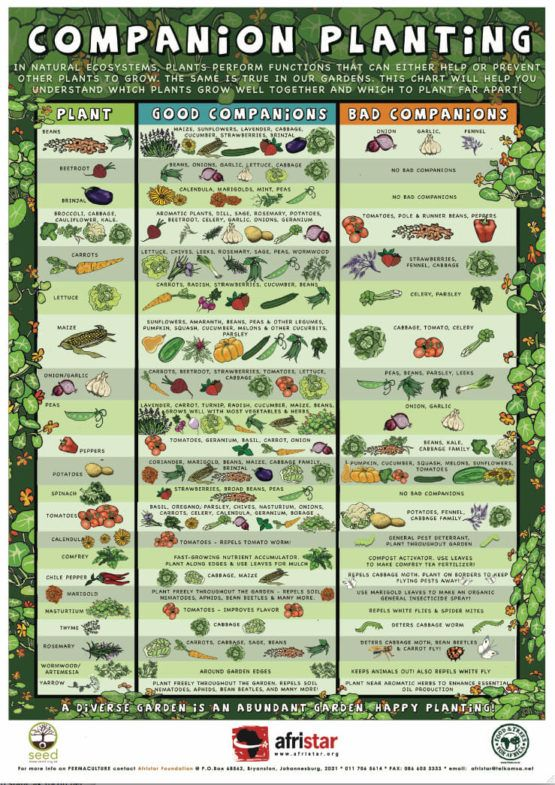 infographic showing successful companion planting pairs