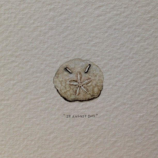 """Day 241 : Commonly known as a """"gesiggie skulp"""" in South Africa, this is actually a sand dollar skeleton (their """"teeth"""" are arranged in a circle called """"Aristotle's Lantern""""). 17 x 14 mm. #365paintingsforants #miniature #watercolor #sand #dollar #skeleton #shell"""