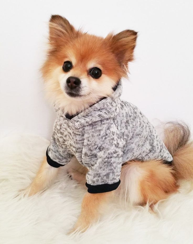 HANDMADE dog clothes, XS~4XL,Gray sweater dog hoodie, pet clothes,small dogs clothes,winter clothes, puppy hoodie,dog hoodies,puppy sweaters by puppydoggyclothes on Etsy