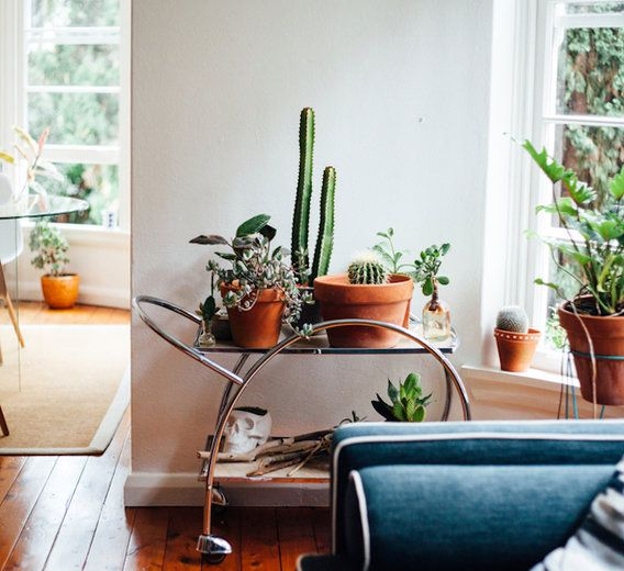 These are the plants your dark bedroom has been begging for.