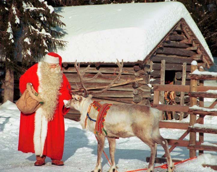 Santa Claus feeding reindeer in Finnish Lapland