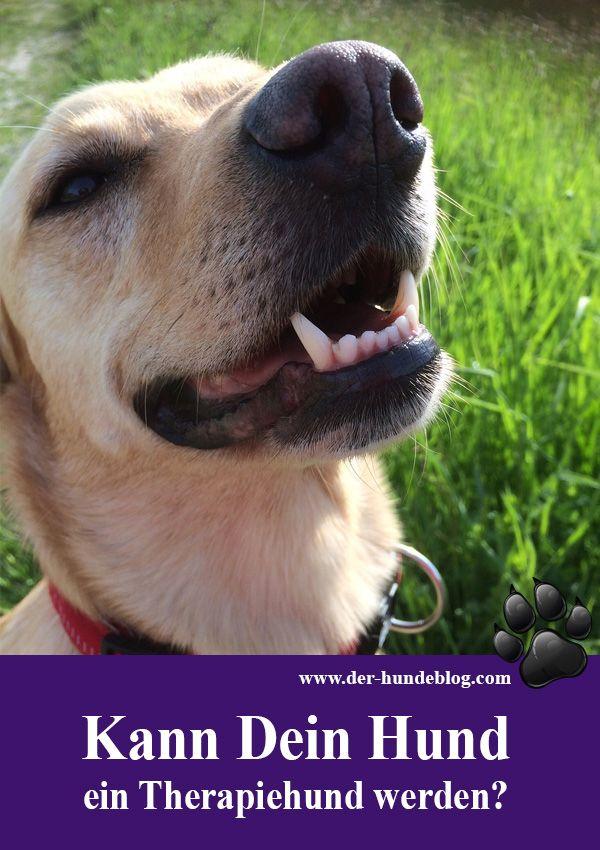 Kann Dein Hund  auch Therapiehund werden? Wie wird ein Hund zum Diabetesspürhund oder zum Epilepsiespürhund? Wie erkennt Dein Hund Krankheiten? Les mehr davon im Blog ...