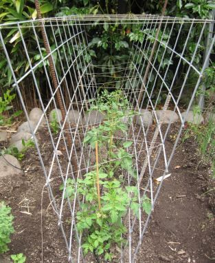 Mosaic's tomato cages | Mosaic Gardens Journal