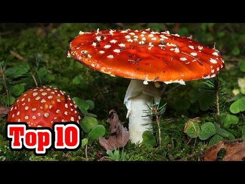 Top 10 MOST DEADLY MUSHROOMS - YouTube