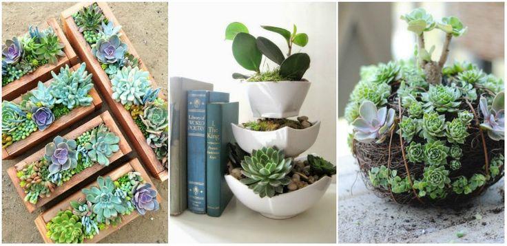 Plante suculente usor de ingrijit, care arata de parca ar fi sculptate - http://ideipentrucasa.ro/plante-suculente-usor-de-ingrijit-care-arata-de-parca-ar-fi-sculptate/