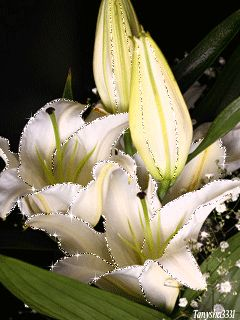 Gif Animated Animation Beautiful Beauty Flowers Lily Mobile For