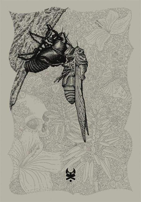 Cicada Changing on Behance