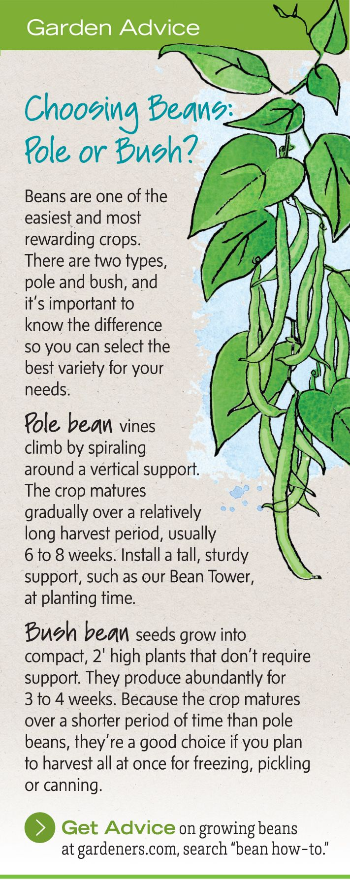 Growing Green Beans - How to Grow Pole Beans, Bush Beans