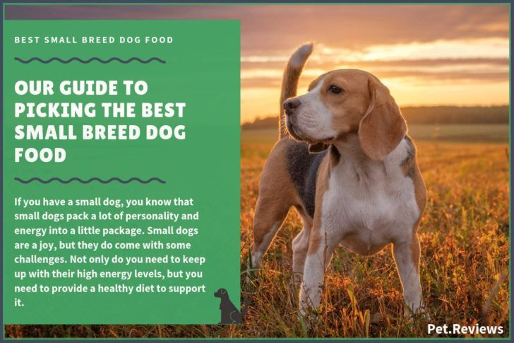 The Domestic Dog Best Dog Food Brands Best Healthiest Small Breed