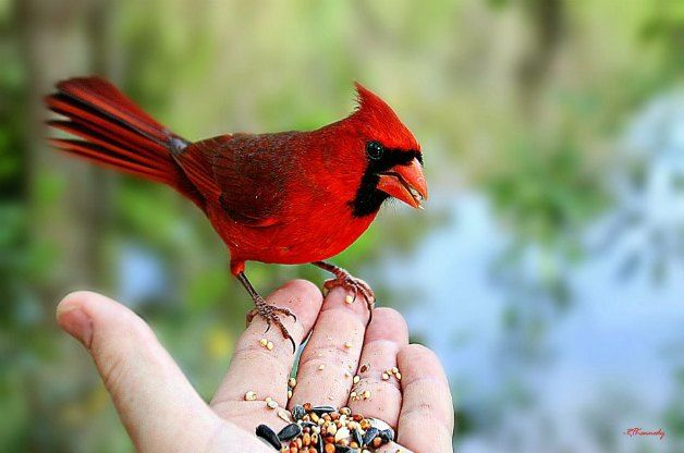 These simple seasonal tips will help you attract birds to your backyard.