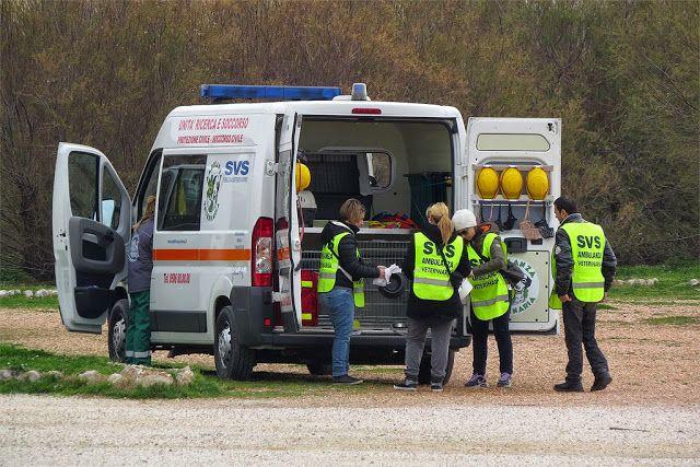 The Veterinary Ambulance of the Società Volontaria di Soccorso (Voluntary Aid Society)