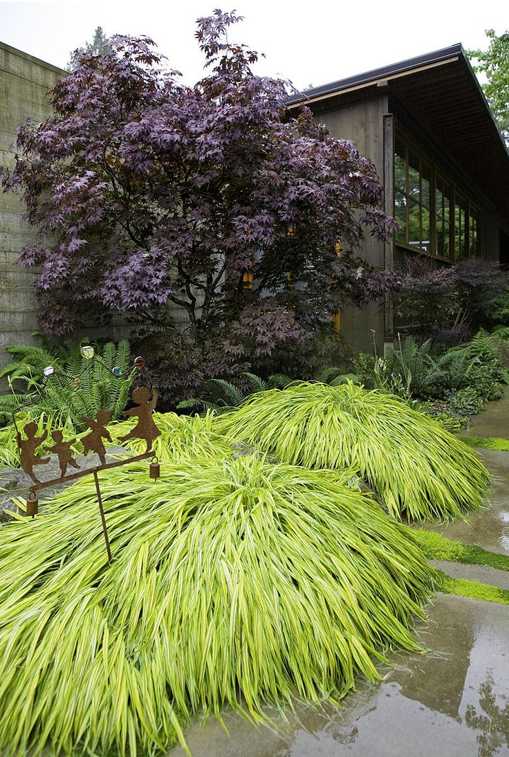 Japanese maple, ferns and Golden Japanese forest grass.