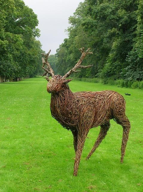 traqueer stag