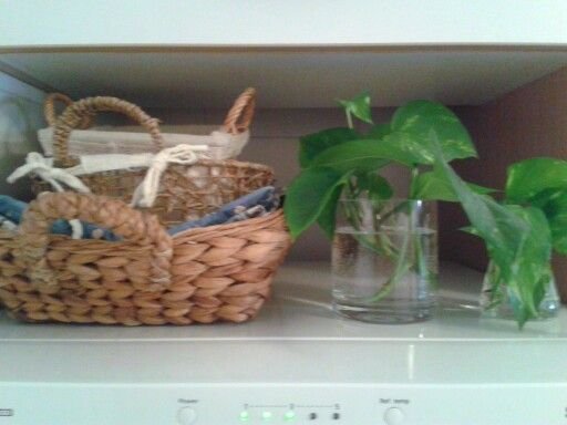 Plants on my fridge