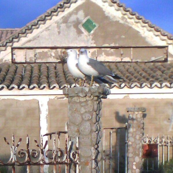 Casalinho de gaivotas !!