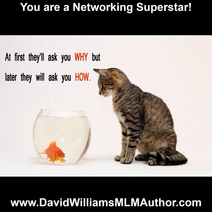 Network Marketing - MLM - Get FIVE  F R  E  E email templates - perfect for any program - use these to follow up with prospects and turn them into new team members!