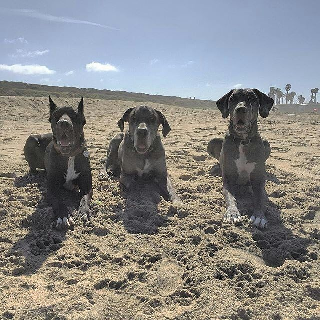 Your Vibe Attracts Your Tribe Socalpawscheck Gameofdanes In